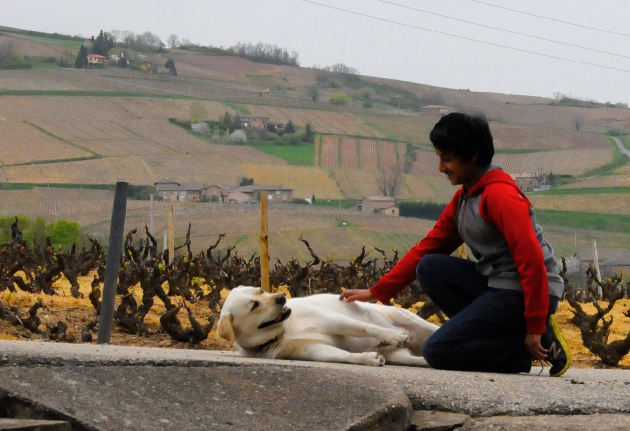 playing with dog at the vineyards of Domaine Matray